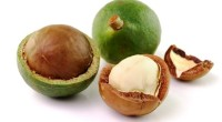 La culture de cette plante, le macadamia, est en pleine expansion sur le continent africain, notamment au Kenya. Plus de 10.000 agriculteurs kényans en ont fait une culture de rente, […]