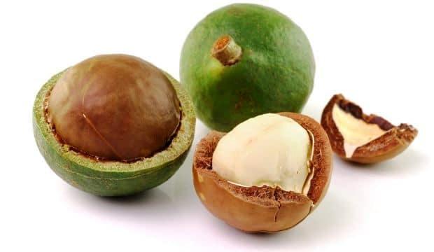 La noix de Macadamia, le trésor des agriculteurs Kényans