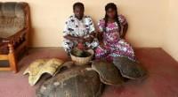 La Chambre Correctionnelle du tribunal de première instance de Lomé a rendu son verdict le 17 octobre 2017, en condamnant le couple ASSIGBE Kokouvi et AFANOU Afi à une peine […]