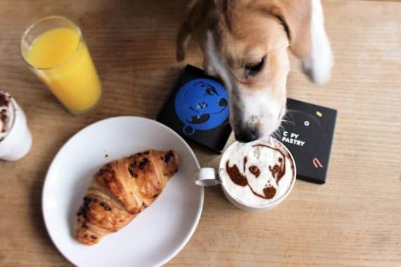 Egypte: un café s'ouvre aux hommes et animaux domestiques