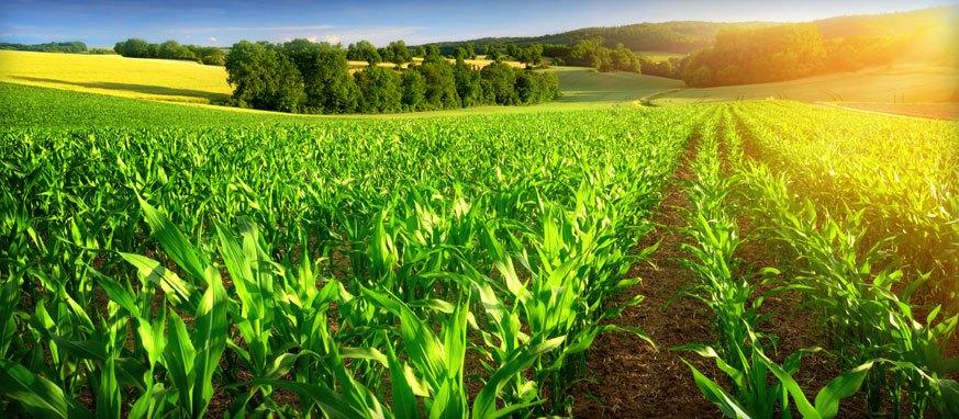 Bénin : 100 milliards de FCFA aux agriculteurs