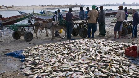 Hook up Charters de pêche Durban