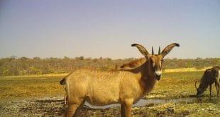 Angola : à la découverte de «l'une des dernières régions sauvages au monde»