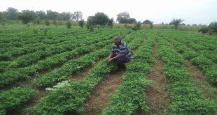 Green Agri Nova : un modèle de réussite de l'entrepreneuriat agricole