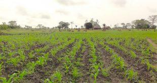 Togo :  l'Israël va apporter son expertise à l'agriculture