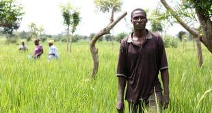 SARA: les agriculteurs  togolais sont rentrés garnis