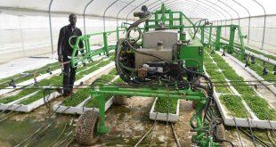 Togo : cette opportunité pour des entrepreneurs agricole