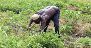 Togo : 43 acteurs agricoles ont reçu des distinctions honorifiques à Kara