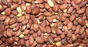 Togo: voici l'évolution du prix de l'arachide sur les marchés locaux d'Afrique