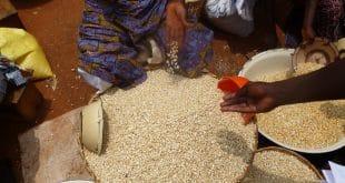 Togo: les prix hebdomadaires des produits agricoles connaissent une évolution
