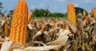 Togo : Etat d'urgence sanitaire, les intrants agricoles disponibles
