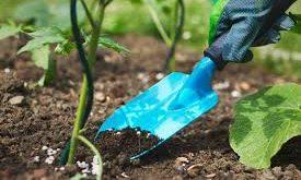 Togo: tout sur les quantités de semences certifiées par producteur