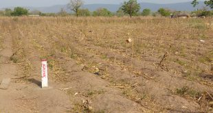 Togo : vers le dessouchage de 500 000 hectares de terres cultivables