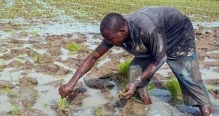 Togo : les clés pour comprendre les zones de transformation agricoles (ZTA)
