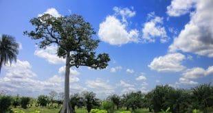 Togo : des alertes météo mises à disposition des agriculteurs