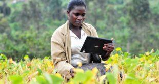 Togo : SimulAgri cette application qui fait la pédagogie aux paysans