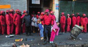 fourmis rouges_afrique du Sud