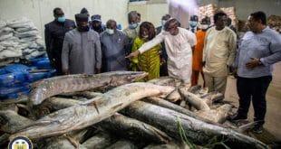Sierra Leone : la première usine de transformation du poisson en marche