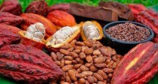 Côte d'Ivoire : un opposant dénonce la gestion cavalière dans la filière cacao